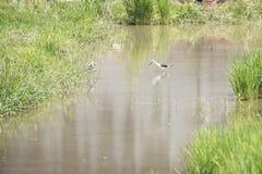 Ecologia naturale degli uccelli Fotografie Stock