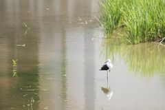Ecologia naturale degli uccelli Fotografia Stock Libera da Diritti