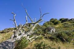 ecologia in pericolo, distruzione degli alberi Fotografia Stock Libera da Diritti