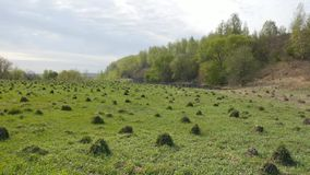 ecologia Sul campo molte colline della formica in primavera video d archivio
