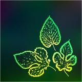 Ecologia verde della natura del fondo Fotografie Stock