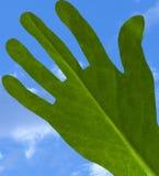 ecologic χέρι Στοκ Εικόνες