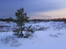 ecologic lizenzfreie stockfotografie