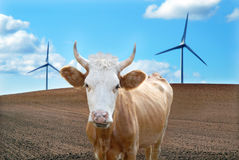 Ecologic cow. Cow and windmills as background Stock Photography