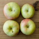 Ecologic Fuji apples. Four fresh and ecologic Fuji apples Royalty Free Stock Photo