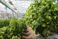 Ecologic greenhouse Royalty Free Stock Image