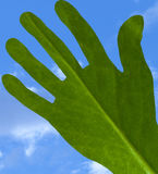 Ecologic hand. On a sky background Stock Images