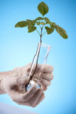 Ecologic laboratory Royalty Free Stock Photos