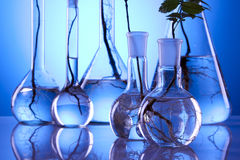 Ecologic laboratory. Looking for new eco friendly source of energy Stock Photography