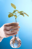 Ecologic laboratory. Looking for new eco friendly source of energy Royalty Free Stock Image