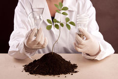 Ecologic laboratory Stock Image