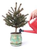 Ecologic xmas tree royalty free stock image