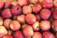 Ecologica apples Stock Image
