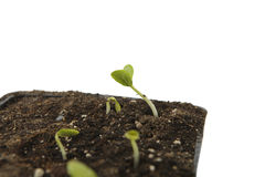 Ecological baby plant Stock Photos