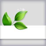 Ecological background Stock Photo