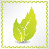 Ecological background with leaf frame Stock Photography