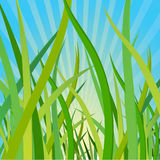 Ecological Background With A Grass Stock Photos