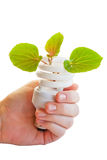 Ecological bulb Royalty Free Stock Image