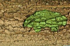 Ecological car from bark texture Stock Photos