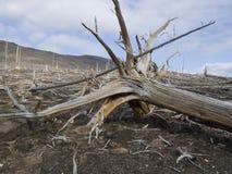 Ecological catastrophe Stock Image
