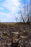 Ecological catastrophe, large-scale felling of the young forest. stock photography