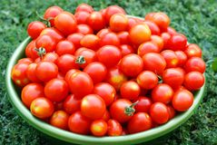 Ecological cherry tomatoes in a basin. Fresh ecological red cherry tomatoes in a round basin isolated on grass Stock Photo