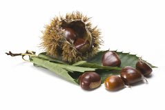 Ecological chestnuts. One urchin with some chestnuts and some leaves isolated on a white background Royalty Free Stock Images
