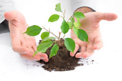 Ecological concept. Stock Images
