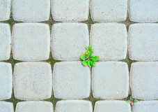 Ecological cobblestone pavement Stock Photo