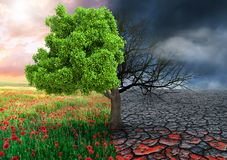 Ecological concept with tree and climate changing landscape.  royalty free stock photos
