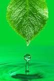 Ecological conceptual background. Droplet fall from green leaf Stock Photos