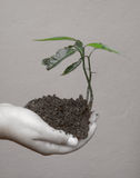 Ecological conscience. Holding a small tree in the hands Stock Photography
