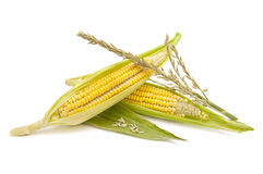 Ecological Corn Stock Photography