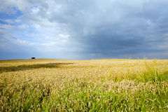 Ecological countryside landscape Royalty Free Stock Photo