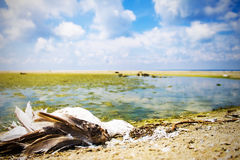 Ecological disaster, extinction of birds, oil spill, nature background Stock Images