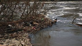 Ecological disaster of water resources. Rubbish from plastic. Contamination pond: plastic bottles left by people thrown like garbage into the river. Ecological stock footage