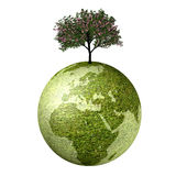 Ecological Earth. Isolated render of an earth and a tree on a white background Stock Photography
