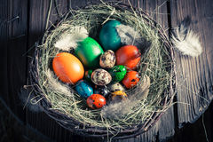 Ecological Easter eggs in the nest with hay Stock Photography