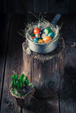 Ecological eggs for Easter in the rustic cottage Royalty Free Stock Photo