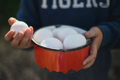 Ecological Eggs in Hand Stock Image