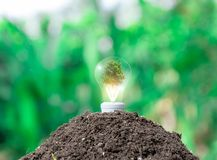 Ecological environment concept light bulbs on the ground and planting. Trees royalty free stock images