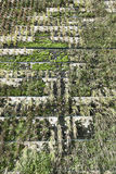 Ecological facade with plants Royalty Free Stock Photos