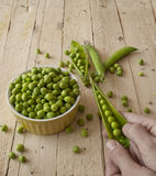 Ecological fresh green peas pods. Stock Photography