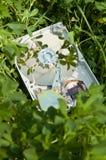 Ecological harddisk Stock Photo