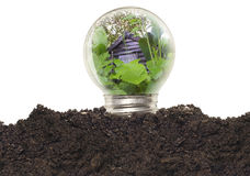 Ecological Light Bulb Stock Photography