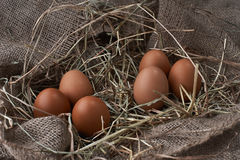 Ecological natural fresh eggs in bird nest born Royalty Free Stock Images