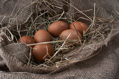 Ecological natural fresh eggs in bird nest born Royalty Free Stock Photo