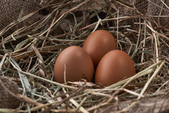 Ecological natural fresh eggs in bird nest born Royalty Free Stock Image