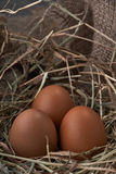 Ecological natural fresh eggs in bird nest born Stock Image