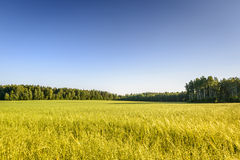 Ecological oat field in Poland Stock Photo